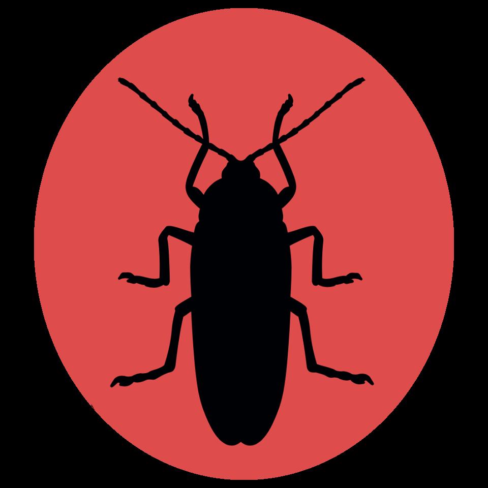 Kakkerlakjes