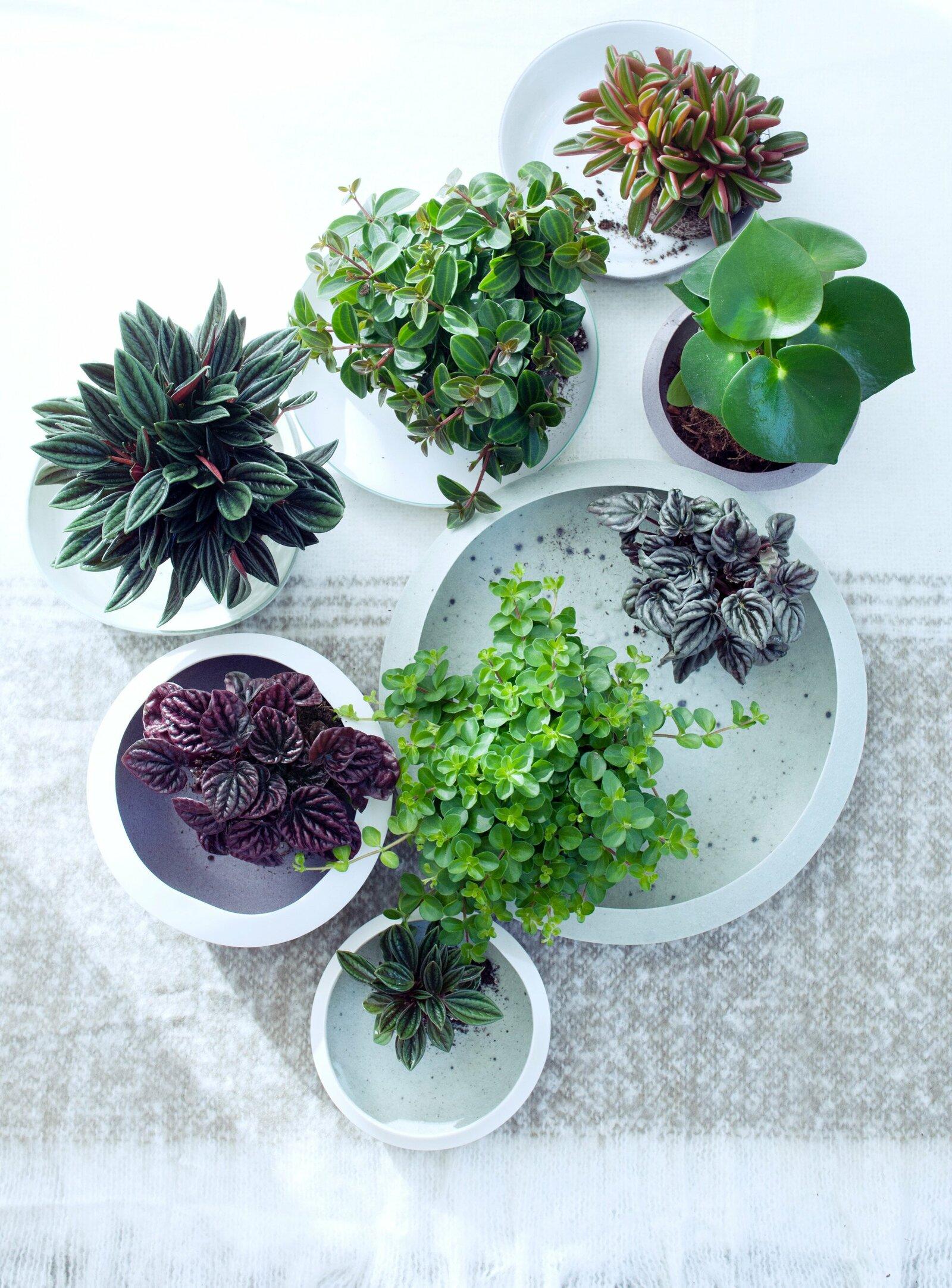 Plantenvoorraad