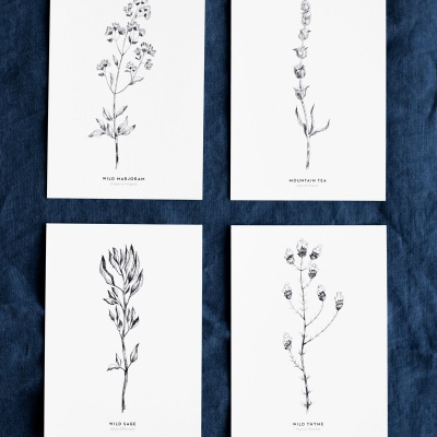 Herb illustrations Postcards