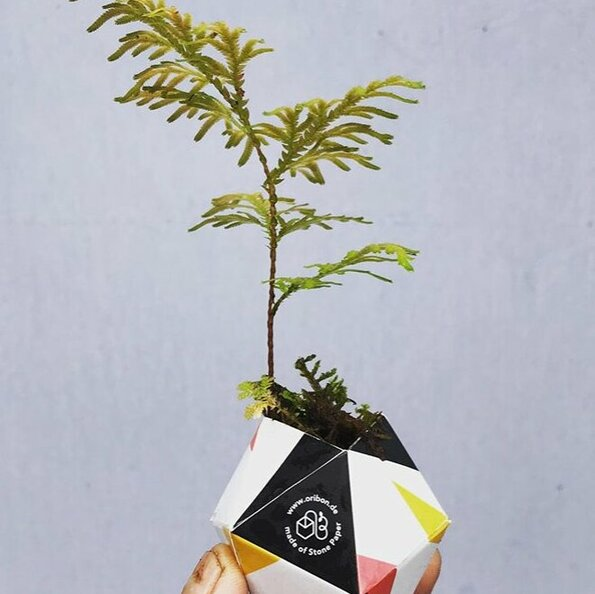 <h1>Oribon</h1>